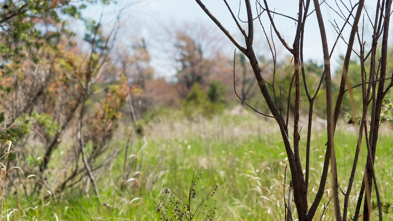 Sticks, Weeds, and a Marsh