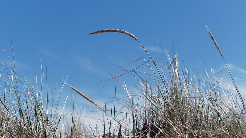 This Photographer Loves Beach Grasses