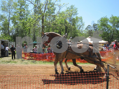 JS - horse pull - Two Horses At pull