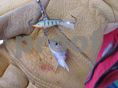 bm out portage lure