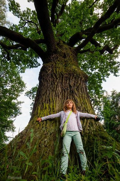 W obronie praw drzew sędziwych