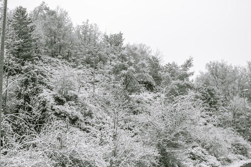 Rapitán nevado