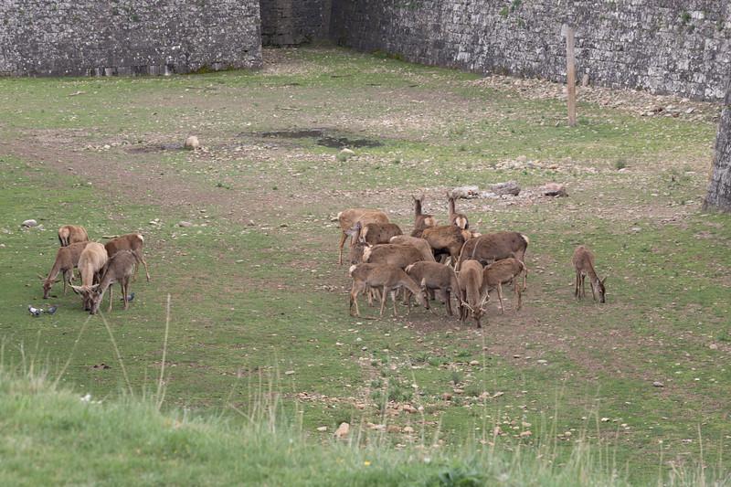 Los ciervos de la Ciudadela.