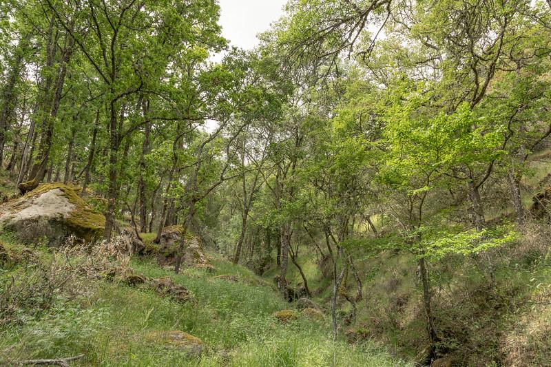 Cabrones, Camino del Duero