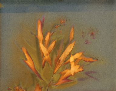Oleander 1, Triptych Part A