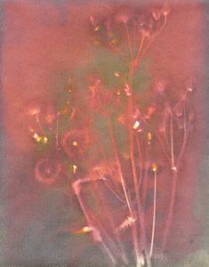 Dandelions on Fire