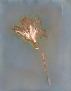 Claude's Epiphyllum II