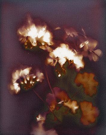 Lumen prints 11x14