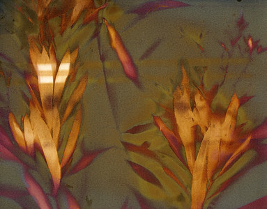 Oleander 1 , Triptych Part B
