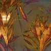 Oleander 1, part B
