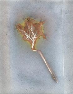 Claude's Epiphyllum I