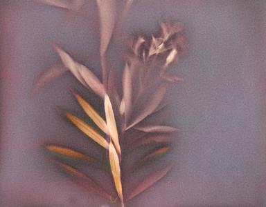 Oleander 2 Triptych, Part C
