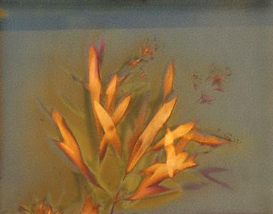 Oleander 1, Part A