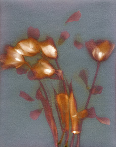 Windblown Tulips