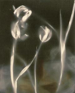 Tulip Bones