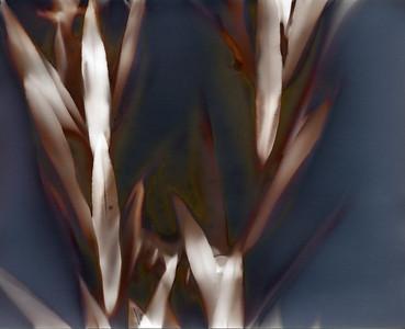 Oleander 2, part B