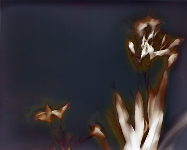 Oleander 3, part A