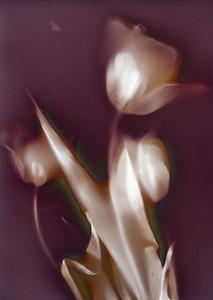 Three Tulips III