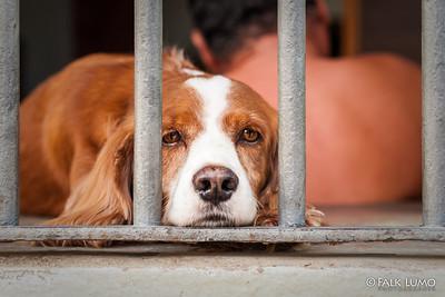 Dog owner, Cuba