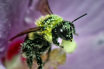 The Pollenator #2 August 22, 2009