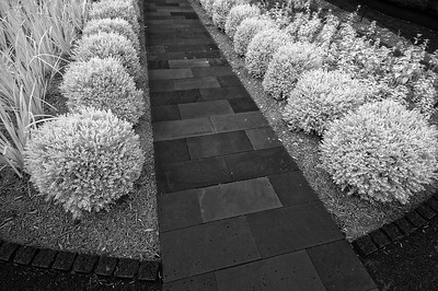 Walk This Way August 2, 2009  A walkway in the new City Garden in downtown St. Louis.  Captured with an infrared-converted Nikon D70s.