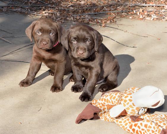 Luna and her puppies