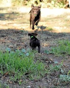 Luna show fetch to Minnie