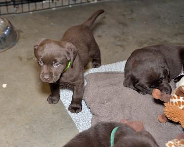Puppy group photos