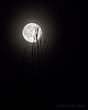 Second Full Moon of July 2015 (20150730-230204-PJG)