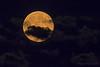 Blue Moon, July 2015 (20150731-212454-PJG)