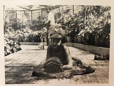 Estufa de Andrada - 1973-74