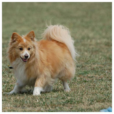 Lure Coursing