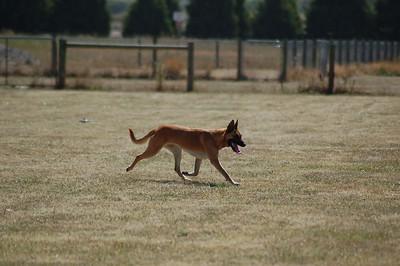 Lure Coursing, KCC Park,  Jan. 2006