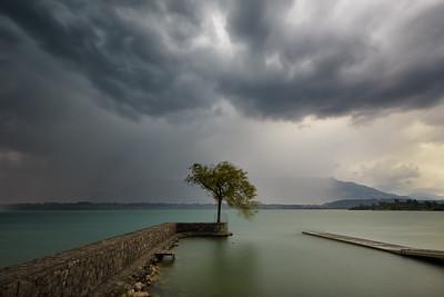 L'arbre et l'orage