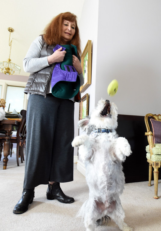. Fran Blum lets Teddy catch one more ball before trying on a coat. Fran Blum, of Boulder, has a business that makes luxury coats for dogs. Cliff Grassmick  Staff Photographer October 13, 2017