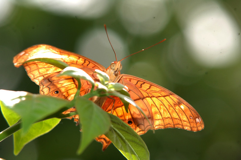 Butterfly House (66)