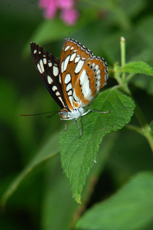 Butterfly House (51)