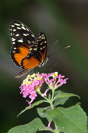 Butterfly House (50)