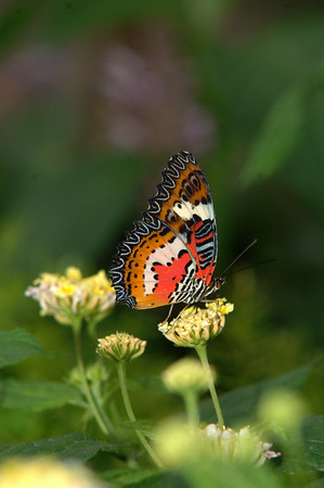 Butterfly House (25)
