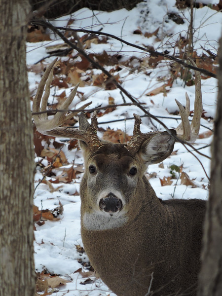 Whitetail Swan Creek 10-Point Buck (39)