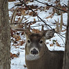 Whitetail Swan Creek 10-Point Buck (39)