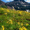 Yankee Boy Basin #060