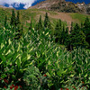 Yankee Boy Basin #076