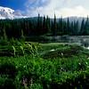 Mt  Rainier (156)