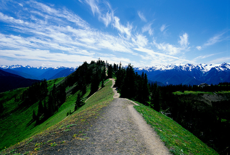 Hurricane Ridge #028