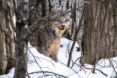 OWL_3214
