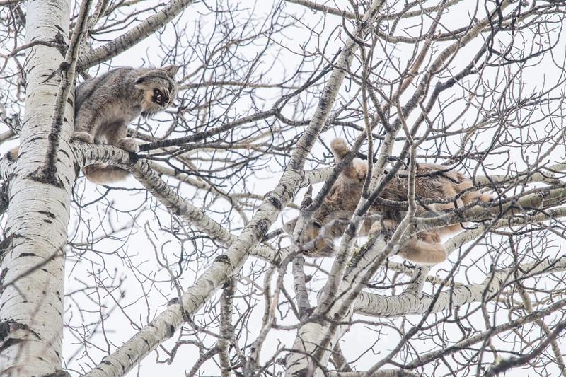 OWL_3245