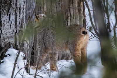 OWL_3218