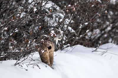 OWL_8797