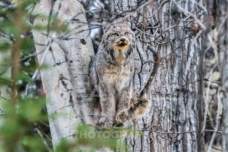 OWL_3234